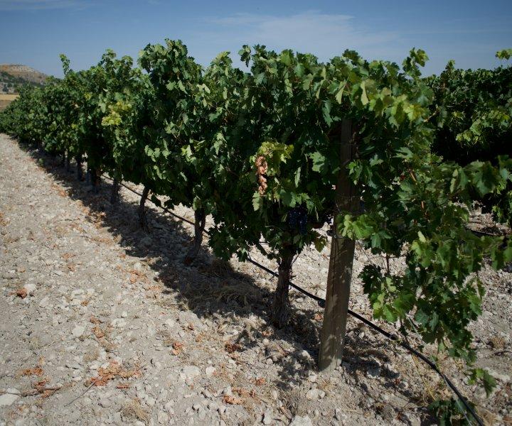 vin espagnol en Belgique